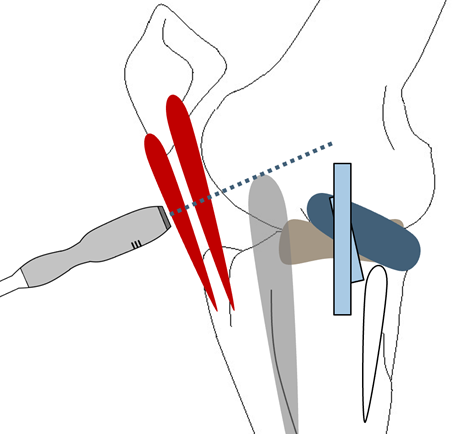 Imaging Stifle Joint