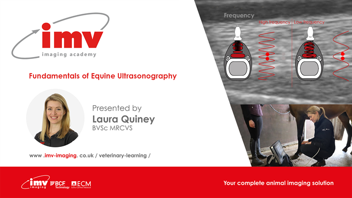 Fundamentals of Equine Ultrasonography